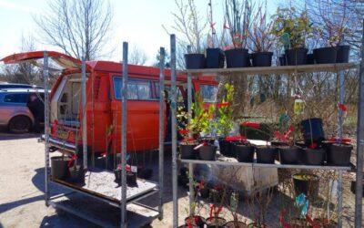 Voedselbos aanleg (deel 1): Fotoverslag road trip langs kwekers