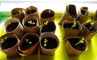 Planten zaaien voor het voedselbos